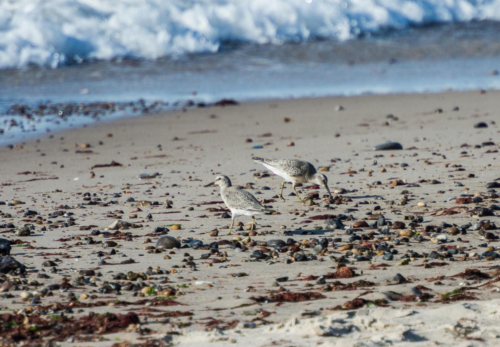 ved-hav-og-strand-1